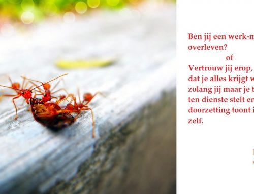 Hoe verdrijf je mieren op natuurlijke wijze